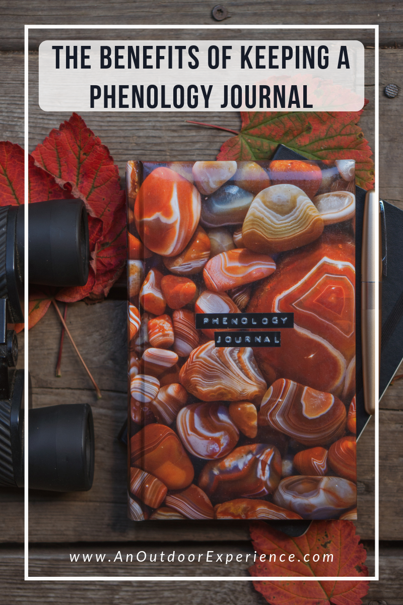What better way to be in tune with nature than by documenting the seasons? That's exactly what a phenology journal is for! I'll show you how to keep one.